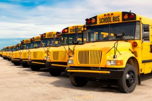 row of yellow school buses lined up in a parking lot.